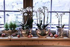 Aktiv- & Wellness-Urlaub in Saalbach Hinterglemm für die ganze Familie Aktiv, Wellness, Plants, Vacation, Ad Home, Plant, Planets