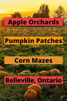 Fall is the perfect time of year for visiting pumpkin patches, apple orchards, and corn mazes. Whether you're looking to go apple picking or want to spend a day out with the kids, these are the orchards and pumpkin patches in the Belleville area you need to visit.
