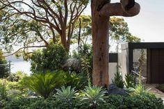 Mosman Landscape Architecture by Secret Gardens - Sydney Landscape Architects The Secret Garden, Secret Gardens, Plant Design, Garden Design, Landscape Architecture, Landscape Design, Small Gardens, Tropical Gardens, Love Garden