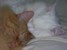 cute Cats, Photography, Animals, Gatos, Animales, Animaux, Photograph, Kitty, Cat