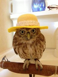 owl/ふくろう