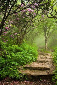 PATHWAYS - ~~Craggy Steps ~ Blooming Catawba Rhododendrons at a foggy Craggy Gardens, Blue Ridge Mountains, North Carolina by Joye Ardyn Durham~~ Beautiful Landscapes, Beautiful Gardens, Magical Gardens, Beautiful Forest, Craggy Gardens, The Secret Garden, Secret Gardens, Beautiful Places, Beautiful Pictures