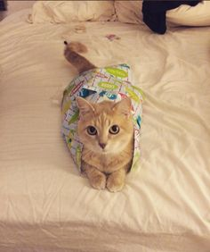 Birthday Kitty http://ift.tt/2DSOPFw