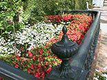 Beautiful Gardens in Savannah