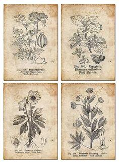 Vintage Botanical floral, plants, Old paper, drawing , set of 4 - digital… Vintage Botanical Prints, Botanical Drawings, Botanical Art, Vintage Prints, Vintage Botanical Illustration, Éphémères Vintage, Images Vintage, Vintage Paper, Vintage Floral