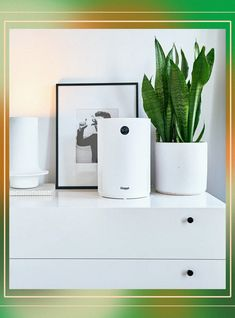 Pet Allergies, Seasonal Allergies, Allergy Asthma, Dream Decor, Air Purifier, Natural Treatments, Night Light, Health And Beauty, Gadgets