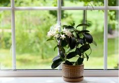 11 Plants For Your Bedroom To Help You Sleep Better – Points of Earth