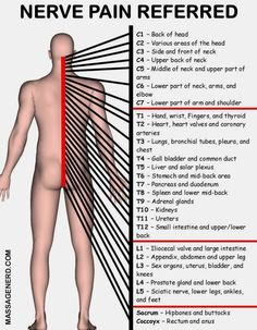 Acupuncture Pain Home Massage For Ladies Muscle Anatomy, Body Anatomy, Spine Health, Medical Anatomy, Human Anatomy And Physiology, Nerve Pain, Human Body, Kundalini Yoga, Healing Meditation