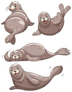 Cute Drawings, Animal Drawings, Illustrations, Illustration Art, Hawaiian Monk Seal, How To Drow, Cute Seals, Marvel Cartoons, Zen Colors