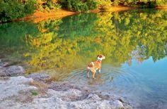 """Chloe at the Bark Park"" Photographer: Leslie Vanauken of Myrtle Beach"