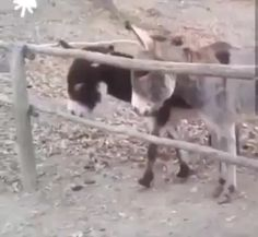Smarter than the average Ass! - Horses Funny - Funny Horse Meme - - What a smart ass The post Smarter than the average Ass! appeared first on Gag Dad. Funny Animal Videos, Cute Funny Animals, Funny Animal Pictures, Animal Memes, Funny Cute, Dog Videos, Videos Funny, Beautiful Creatures, Animals Beautiful