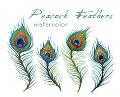 Feather Clip Art, Digital Feather, Digital ClipArt, Peacock Feathers on Etsy, $4.29