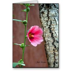 Hollyhocks Hold Up The Fence Greeting Cards
