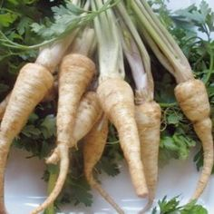 Hamburg Rooted Parsley grows a tap root that is similar to parsnips, w/ edible greens Root Vegetables, Organic Vegetables, Growing Vegetables, Herb Seeds, Aromatic Herbs, Grow Your Own Food, Parsley, Carrots, Herbalism