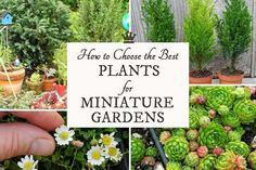 Expert advice on how to choose the best plants, containers, and accessories for your indoor and outdoor miniature gardens.