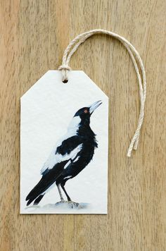 These gift tags feature my original watercolour painting of an Australian Magpie (Cracticus tibicen). Magpies are a favourite with many Australians because of their playful nature and iconic warbling call. Magpies are gifted vocalists and have a wide range of calls and sometimes mimic other birds. They are widespread and common across much of Australia and frequent many home gardens and parks. During the breeding season adults can aggressively defend their nests and swoop unsuspecting…
