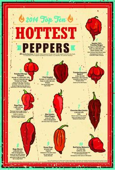 The Top 10 Hot Peppers poster lists the hottest peppers of Using Scoville Heat Units, the peppers are measured on scale ranking. The 12 18 poster is printed on heavy-weight matte paper…More 3 9 8 0 8 Pepper Scale, Stuffed Hot Peppers, Stuffed Mushrooms, Chile Picante, Herbalife Shake Recipes, Hot Sauce Recipes, Hot Pepper Recipes, Pepper Seeds, Ghost Peppers