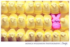 No words can express how much I love Peeps- especially yellow chicks. They really are the best. Love, love, love!!!