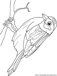 Sparrow On Audio Stories For Kids Free Coloring Pages From Light Up Your Brain