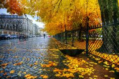 ***осень [Autumn] (St Petersburg, Russia) by Ed Gordeev / 500px