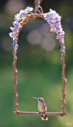 ideas about Hummingbird Plants on Pinterest