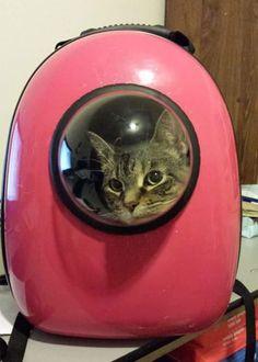 Podrny Plecak Dla Kotw Pozwala Podrowa Jak Astronauta  Interesujace