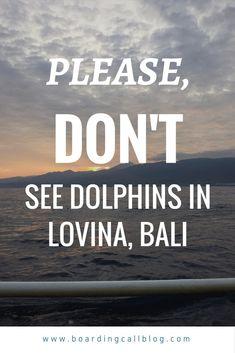 Lovina Dolphin tour - is it ok?