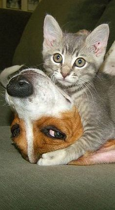 2 FIGHTER ;-)))) #dog #cat puppy kitty #kitten cute funny #photo by Luke O'Connor -- plus.google.com