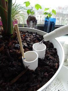 Pot à auto-irrigation pour plantes d'intérieur Irrigation, Cleaning Vinyl Siding, Indoor Flowering Plants, Green Life, Permaculture, Planting Flowers, Planters, Nature, Floral