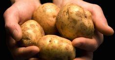 PATATA DI TOLÈ Per i bolognesi DOC le uniche verdure contemplabili sono le patate. Specialmente quelle di Tolè, sugli Appennini emiliani, dove cresce una patata a pasta gialla o a basta bianca che si presta a innumerevoli utilizzi: le prime sono ottime fritte o al forno, le seconde possono essere declinate in gnocchi o purè.