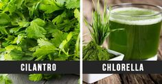 This is Why You Need to Eat Cilantro With Chlorella to Eliminate Heavy Metals From Your Body