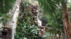 #garden #interior #design #zahrada #vertikalna zahrada #palm #flowers #flower #plant #plants #kvety #greenwall #zelenastena #nature #priroda #interier #alvex #hanginggardens Vertical Garden Diy, Vertical Gardens, San Francisco Zoo, Plant Wall, Plant Leaves, Gardening, Landscape, Gallery, Creative