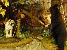 Le musée régional de Khabarovsk #instantVDS16