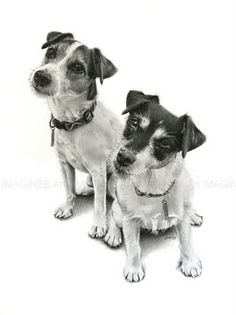 Dogs, done in pencil.