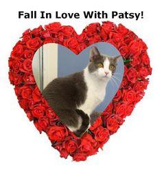 Patsy Cline Cat • American Shorthair • Adult • Female • Medium Paws Animal Shelter Urbana, OH