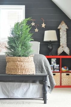 Not exactly a pine tree but great idea for an alternative Christmas tree.  Some sort of juniper in a rustic basket.