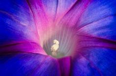 Morning Glory Photo by Liz Andersen -- National Geographic Your Shot
