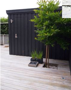 Love the black backdrop, timber deck and how this creates a rich, natural base for the tree <3