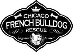 Chicago French Bulldog Rescue identity, www.snackbox.us