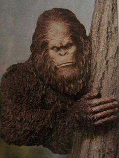 16 Best Sasquatch Reports Images Bigfoot Cryptozoology Aliens