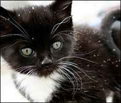 Cute cats and winter days! Keep you cat warm this winter.  #winter