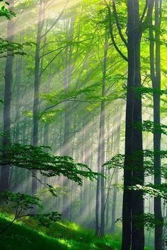 Summer Forest, Bulgaria!