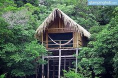 Jungle tree house lodge Amazon Rainforest | River Bungalows in