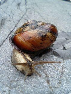 designjoonos: 蝸牛との出会い 고리의 계곡에서 만난 달팽이