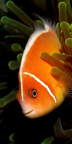 Anemone fish. What a great post! We just absolutely love animals. Whether it's a dog, cat, bird, horse, fish, or anything else, animals are awesome! Don't you agree? -- courtesy of www.pawstruck.com
