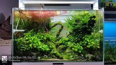 60x30x36cm | 64L | Day 452 aquascape by #peHa68 .. #anubias #aquascaping ... Pin by Aqua Poolko