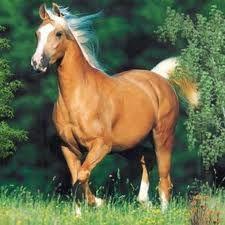cavalos lindos - Pesquisa do Google