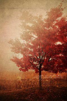Fiery Red Autumn Tree, Landscape Photo, Autumn Scene, Fall, Woodland, Nature, Golden . 4x6 Print