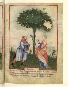 Nouvelle acquisition latine 1673, fol. 18, Récolte des citrons. Tacuinum sanitatis, Milano or Pavie (Italy), 1390-1400.