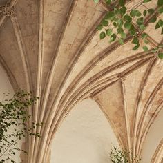 The fabulous vaulted ceilings in our great hall with some visiting trees 🍃